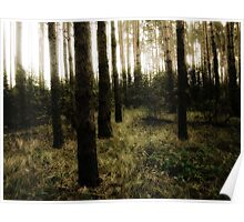 Vintage Photo of Pine Forest 10 Poster