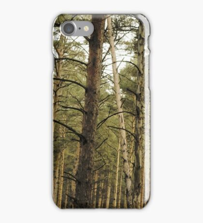 Vintage Photo of Pine Forest 11 iPhone Case/Skin