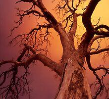 apocalyptic tree by Tony Middleton