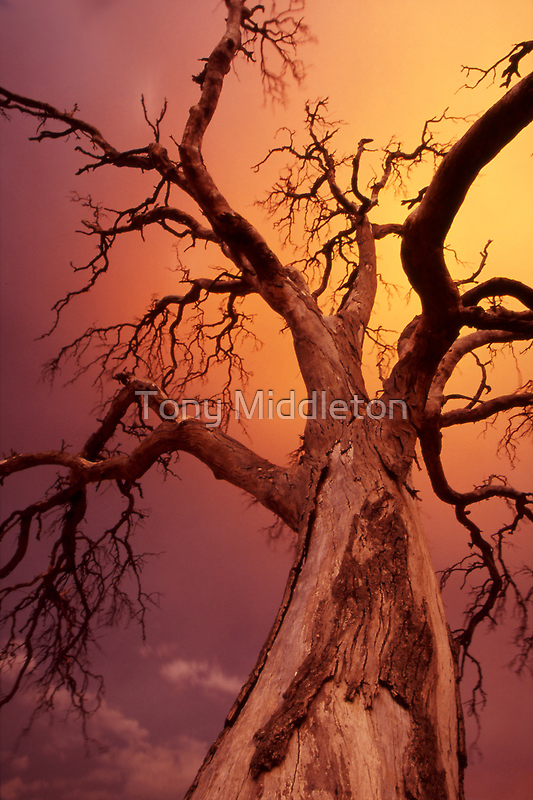 apocalyptic tree by Tony Middleton