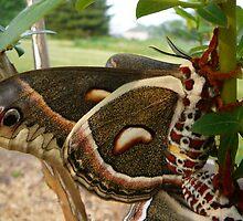 Moth by suebankert