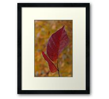 The Warm Glow of Fall - a Vertical View Framed Print