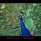 Peacock - Cool Stuff by Maria A. Barnowl