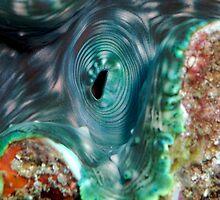 Blue Clam by Douglas Stetner