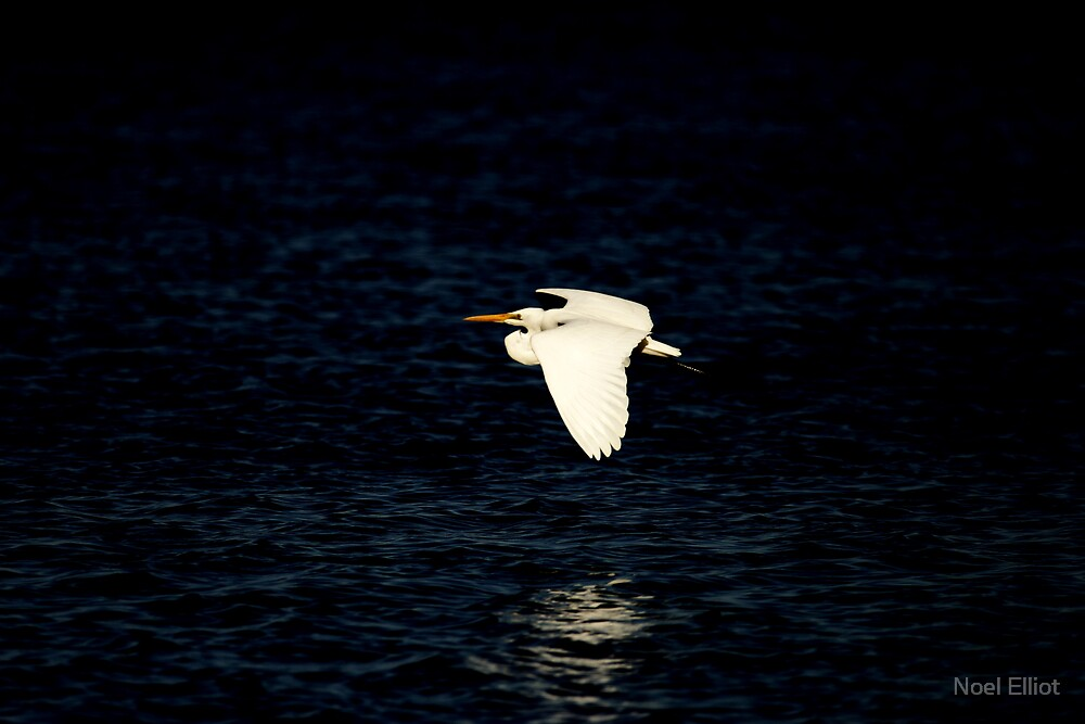 Bird # 6 by Noel Elliot