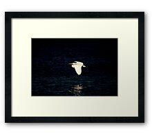 Bird # 6 Framed Print
