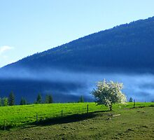 Blossoms and mist by chartling