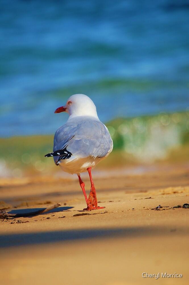 seagull by Cheryl Morrice