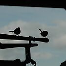 Wrens in silhouette by gary A. trounson