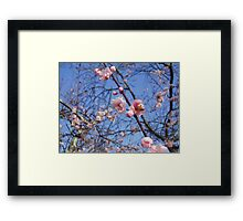 Bees on Pink Blossoms Framed Print
