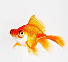 Goldfish by Mimiq