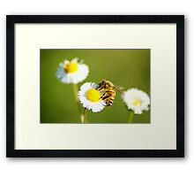 Lone Bee Framed Print