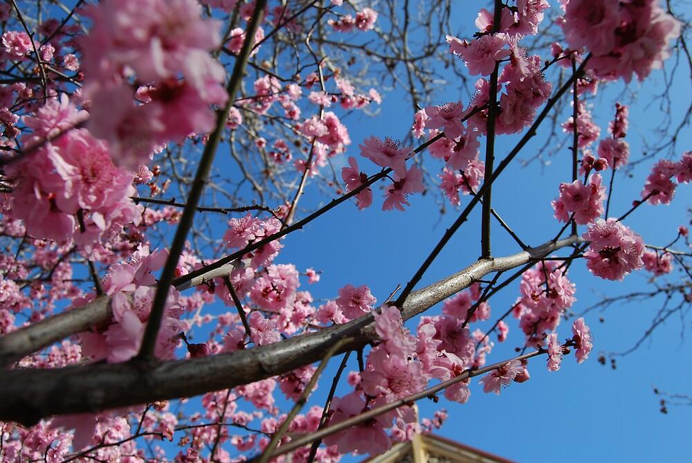 Blooms by Princessbren2006
