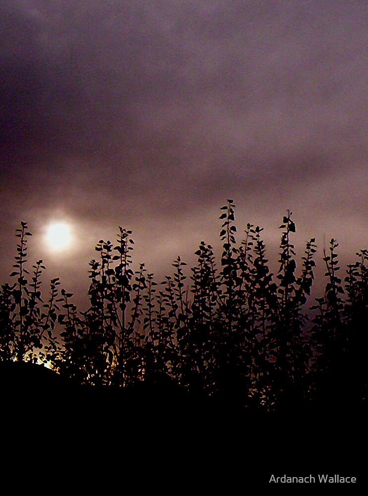 Moody wandering. by Ardanach Wallace
