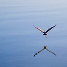 bird with outstretched wings by Martin Pot