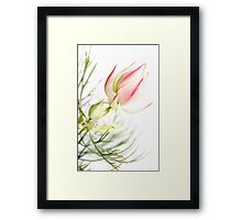 Protea sugar and spice Framed Print