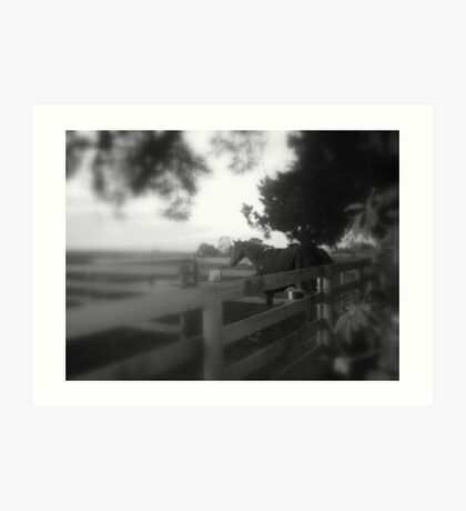 horse standing near the fence Art Print