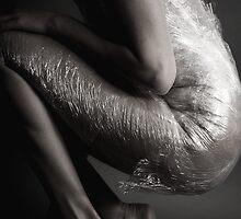 wrap by zelko
