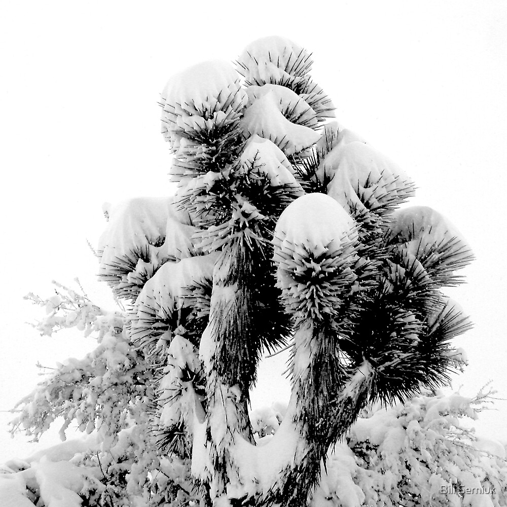 Joshua Tree in Snow by Bill Serniuk