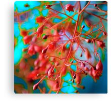 Fiery Red Clusters (detail) Canvas Print