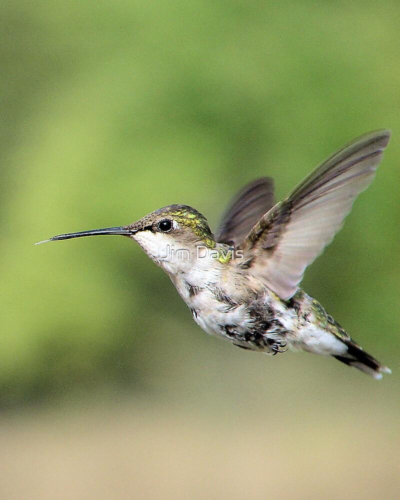 Hummingbird In Flight by Jim Davis