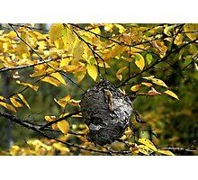 Hornet's Nest II Photographic Print