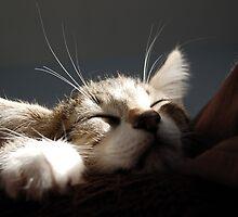 Kitten Sleeping by dozzie