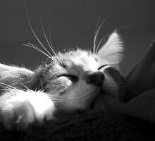 Kitten Sleeping BW by dozzie