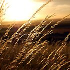 Grass at Sunset by dozzie