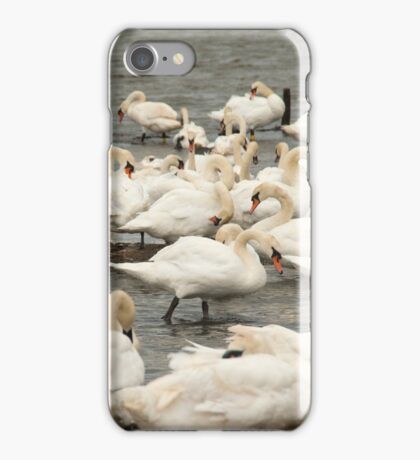 A host of swans iPhone Case/Skin