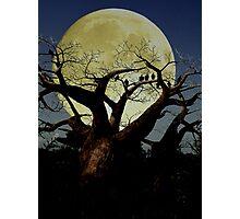 Serengeti Photographic Print
