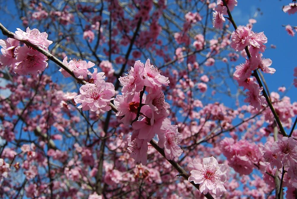 spring is near by Princessbren2006