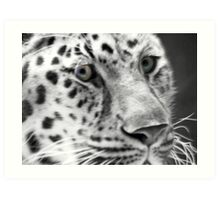 Jaguar Eyes Art Print