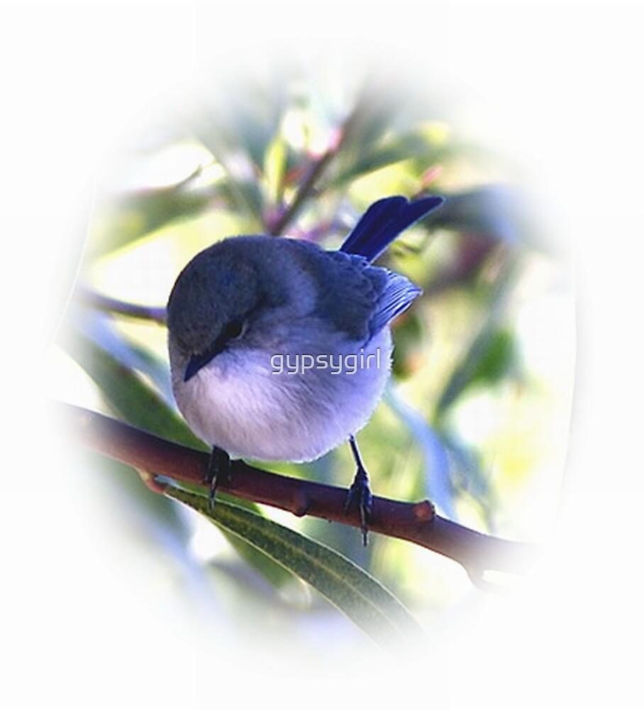 Blue Wren by gypsygirl