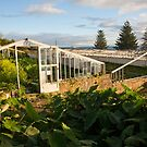 Abandoned pineapple greenhouses by Gaspar Avila