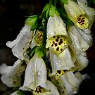 Foxgloves  by Charles & Patricia   Harkins ~ Picture Oregon