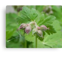 Crane's Bill and Danelion Seed Canvas Print