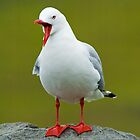 Talking Seagull by Daniel Attema