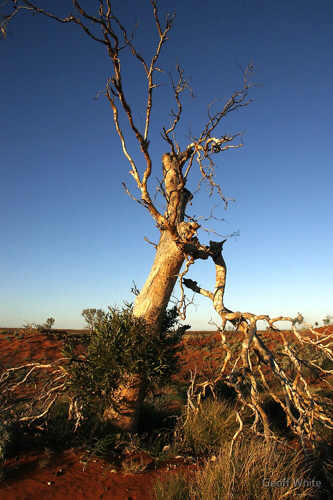 Weathered Tree by Geoff White