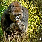 Gorilla by imagetj