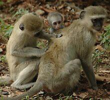 Monkey business by Richard3