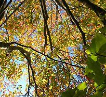 Scottish Autumn by SugarDove