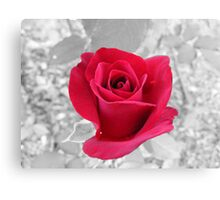 Colored Rose Canvas Print