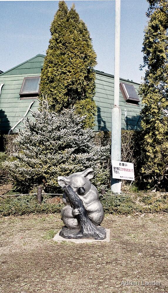 Tokyo koala by Adrian Lander