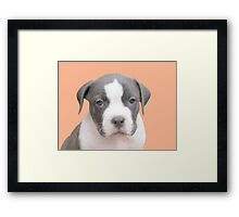I'm Too Cute For Words ~ Framed Print