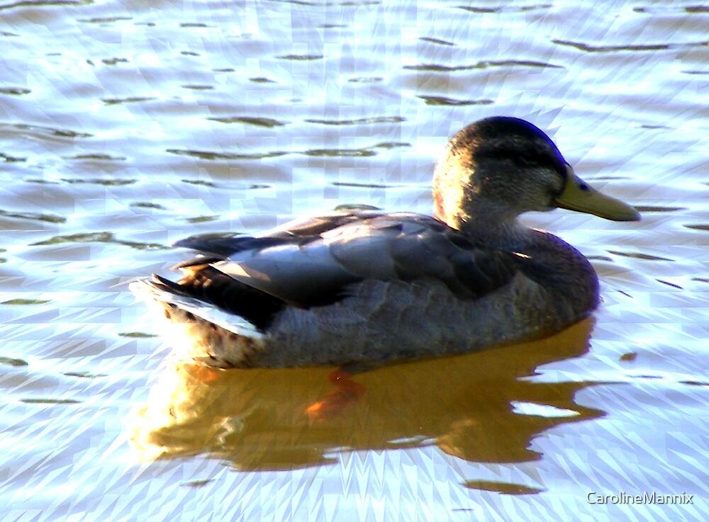 Duck by CarolineMannix