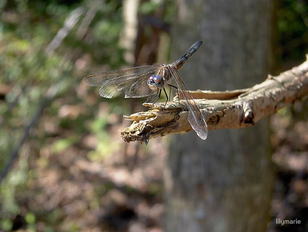 Dragon on a limb by lilymarie