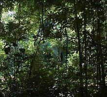 Belize Jungle by soccermomva