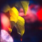 Lemon Tree Leaf by MoiMM