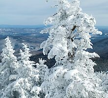 View From Mt. Killington by Susan R. Wacker